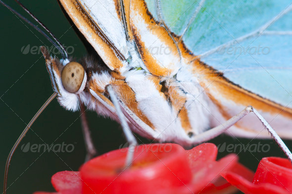 Macro of a Tropical Butterfly - Stock Photo - Images