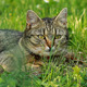Cat Hunting - VideoHive Item for Sale