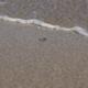 Sandy Beach 01 - VideoHive Item for Sale