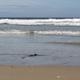 Sandy Beach 03 - VideoHive Item for Sale