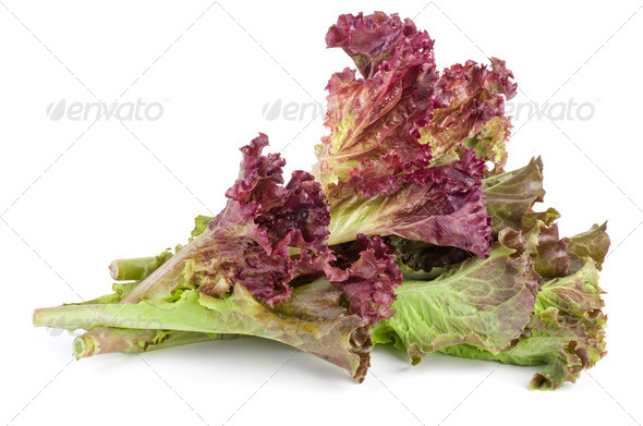 Red leaf lolo rosso lettuce - Stock Photo - Images
