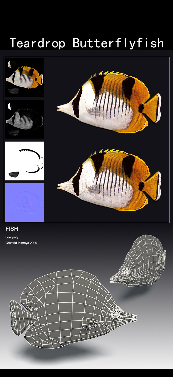 Teardrop Butterflyfish - 3DOcean Item for Sale