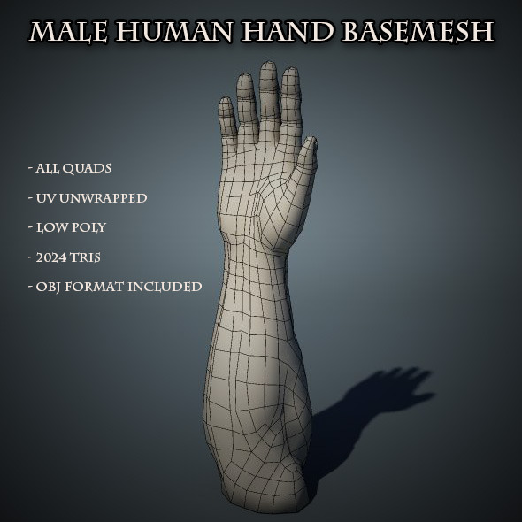 Human Male Hand Base Mesh - 3DOcean Item for Sale