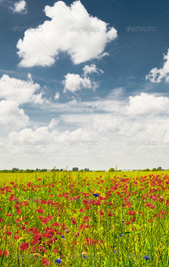 Splendid summer landscape of meadow. - Stock Photo - Images