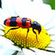 Insect Collects Pollen On Flower 1 - VideoHive Item for Sale
