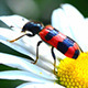 Insect Collects Pollen On Flower 2 - VideoHive Item for Sale