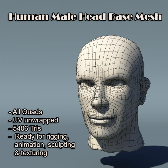 Human Male Head Base Mesh - 3DOcean Item for Sale