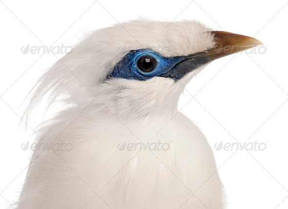 Close-up of Rothschild's Swift, Cypseloides rothschildi, 5 years old, in front of white background - Stock Photo - Images