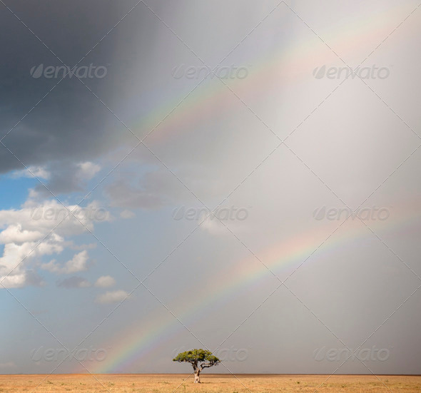 Rainbow at the Serengeti National Park, Tanzania, Africa - Stock Photo - Images