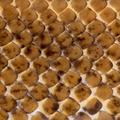 Close-up of Spinner Python, Royal python skin, ball python, Python regius, 2 years old