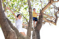 children on the tree - PhotoDune Item for Sale