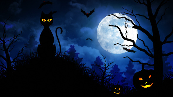 Halloween Scary Cat by FXBoxx | VideoHive