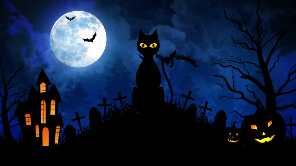 Halloween Scary Cat II by FXBoxx | VideoHive