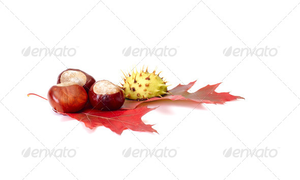 Colorful chestnuts and leaves on a white. - Stock Photo - Images