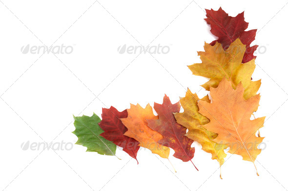Beautiful autumnal leaves on a white. - Stock Photo - Images