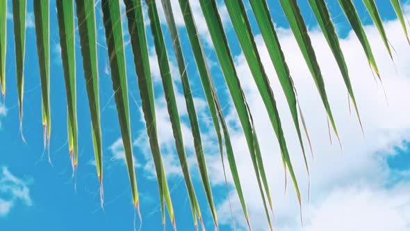 green leaves of a palm tree and the sun by ultrahdenis new videohive
