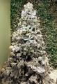 White Christmas tree - PhotoDune Item for Sale