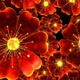 Red Flowers - VideoHive Item for Sale