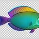 Cartoon Tang Fish Version 06 - VideoHive Item for Sale
