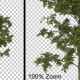 Thin Breezy Tree Vol2 - Alpha Channel - VideoHive Item for Sale