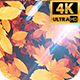 Autumn Leaves 4k - VideoHive Item for Sale