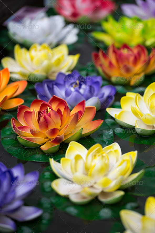 Lotus-flowers - Stock Photo - Images