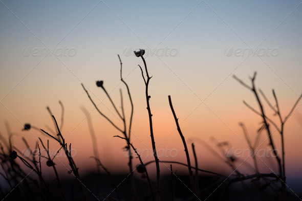 Close up of a greek plant at sunset - Stock Photo - Images