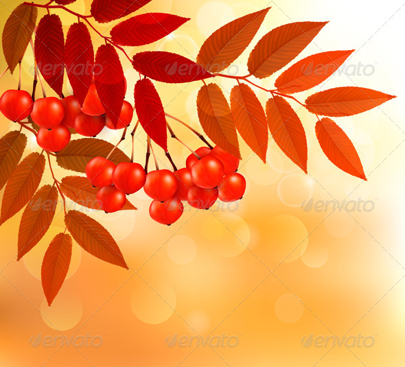Autumn Background with Colorful Leaves and Rowan.  - Flowers & Plants Nature