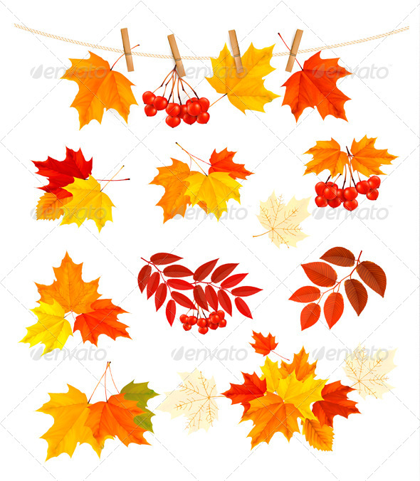 Autumn Background with Colorful Leaves - Nature Conceptual