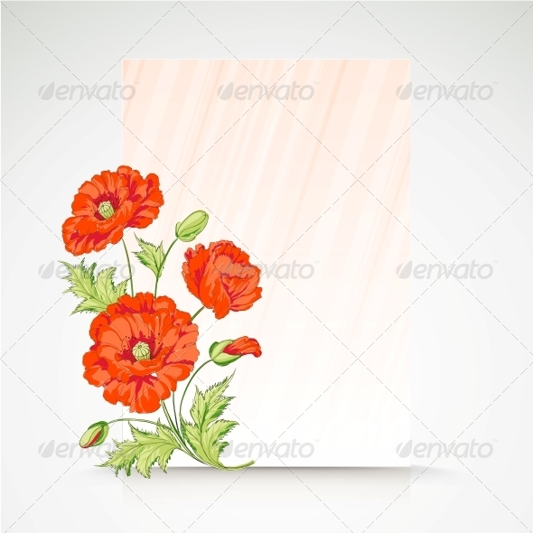 Frame with Flowers of Poppies. - Seasons Nature