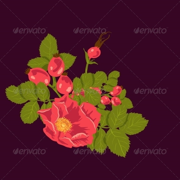 Floral Background with Wild Rose - Patterns Decorative