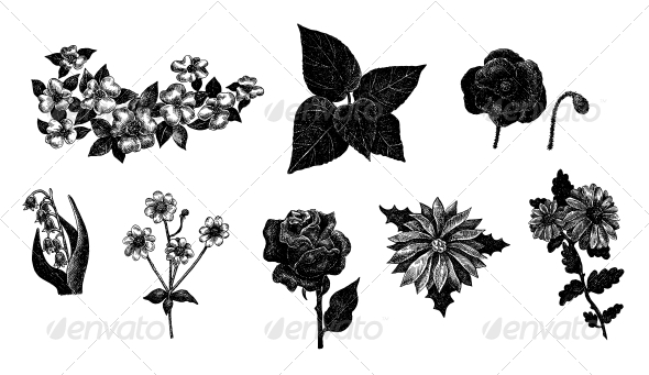 Vector Set of Hand Drawn Ink Vintage Flowers - Flowers & Plants Nature