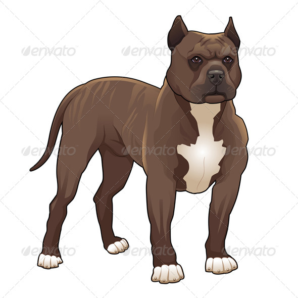 Pitbull. - Animals Characters