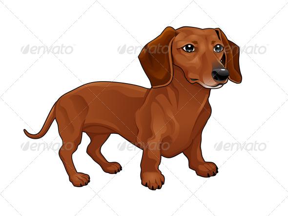 Dachshund. - Animals Characters
