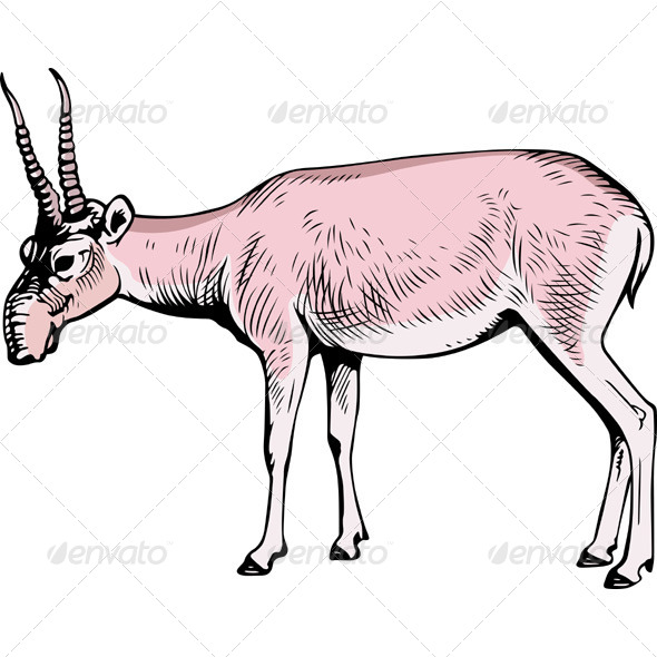 Saiga Antelope - Animals Characters