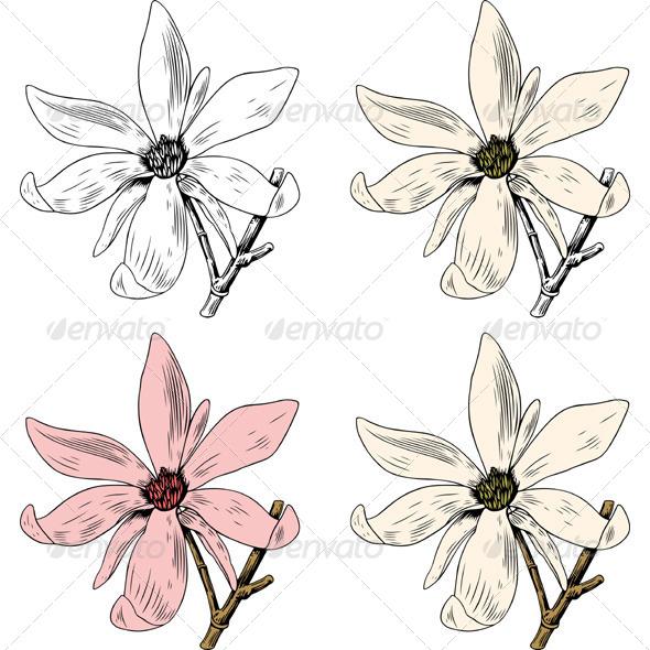 Anise Magnolia - Flowers & Plants Nature