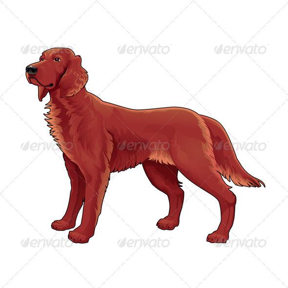 Irish Setter.  - Animals Characters