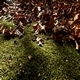 Forest Moss 2 - VideoHive Item for Sale