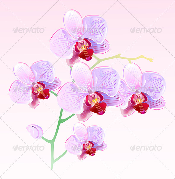 Pink Orchids Spring Branch - Flowers & Plants Nature