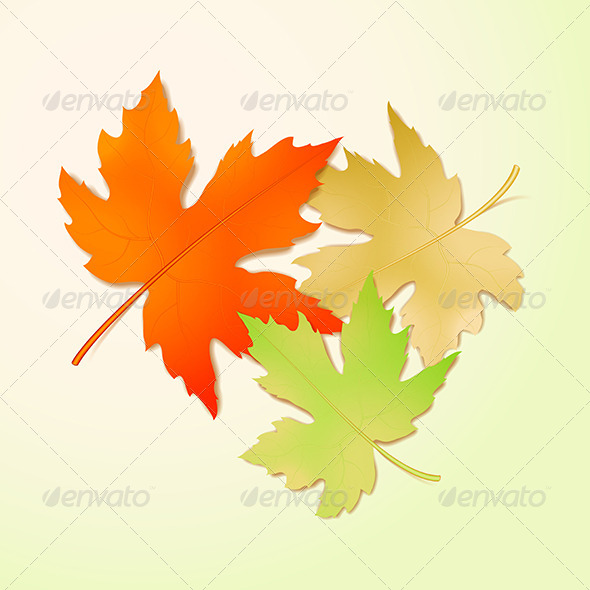 Autumn Maple Leaves - Seasons Nature