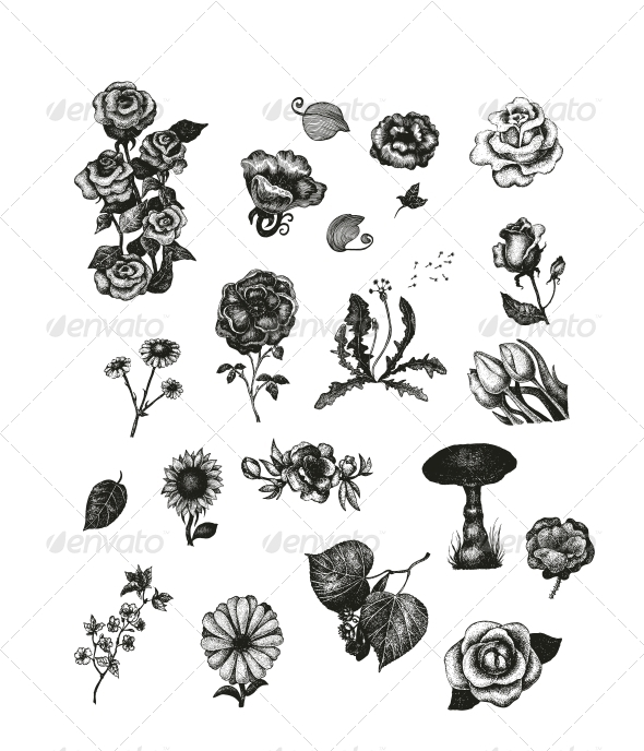 Vector Set of Vintage Flowers - Flowers & Plants Nature