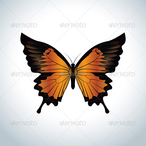 Orange Butterfly - Animals Characters