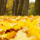 Autumn Wind - VideoHive Item for Sale