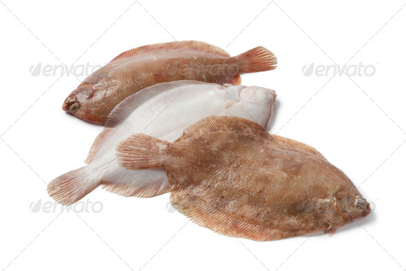 Lemon sole fishes - Stock Photo - Images