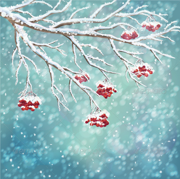Winter Snow-Covered Rowan Berry Branch Background - Seasons Nature