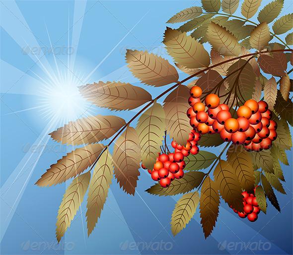 Mountain Ash - Seasons Nature