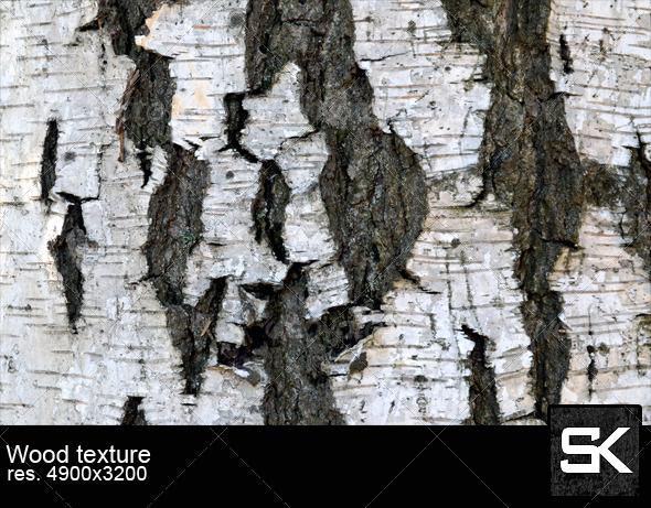 Texture Of Birch Bark - Wood Textures