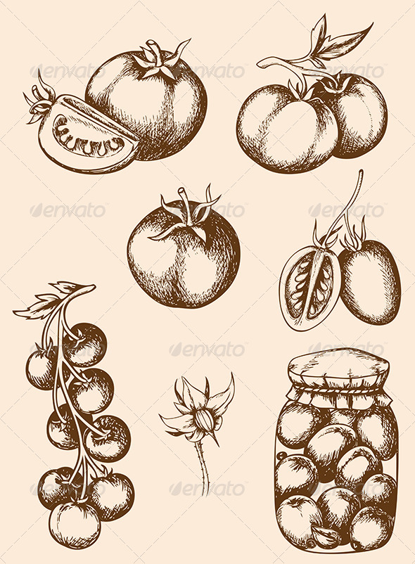Vintage Vector Tomatoes - Food Objects