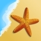 Starfish on the Beach - GraphicRiver Item for Sale