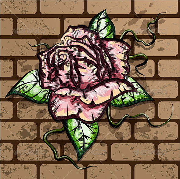 Rose on the Wall - Flowers & Plants Nature
